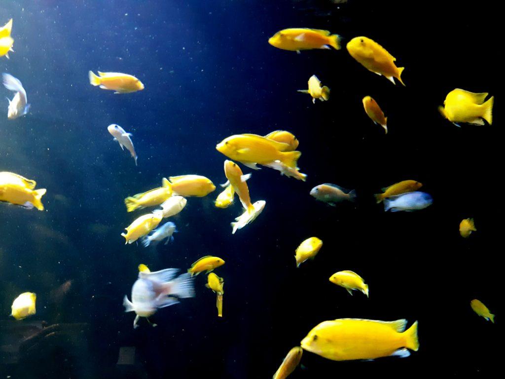 La imagen tiene un atributo ALT vacío; su nombre de archivo es peces-1024x768.jpg
